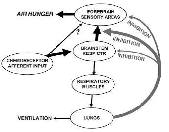Banzett 2007 Fig 3 air hunger