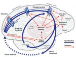 Cisek Kalaska Neural mechanisms 2010 Fig 1