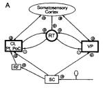 Jeanmonod etal Figure 7A RTN connections somatosensory