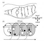 Humphries etal 2007 Fig 2