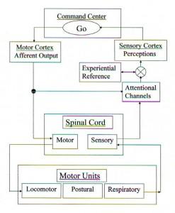 Locomotor signal processing (2008)