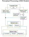 Perceptual Processing 2004