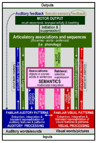 Basic speech processing modes (Price 2012, Petersen et al. 1)