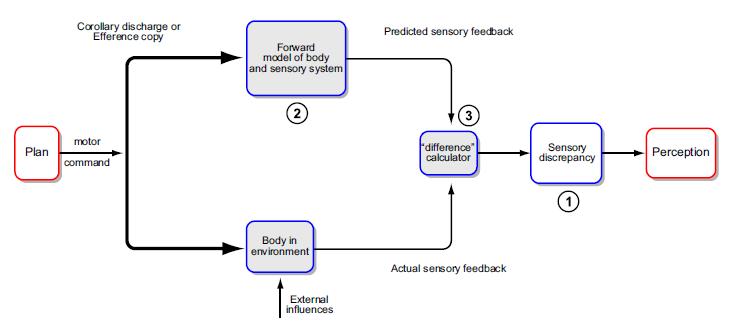 Proske Gandevia Proprioceptive senses 2012 Fig 11